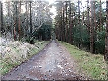 J3530 : The upper tier Donard Wood forest road by Eric Jones