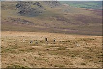 SN1332 : Beddarthur in the Preseli Hills, Wales by Becky Williamson