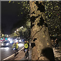 TQ3078 : London Plane in the evening rush hour, Millbank, London by Robin Stott