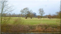 SO5635 : The Wye flood plain at Holme Lacy by Jonathan Billinger