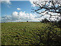 ST8510 : Hod Hill, site of Roman fort by Mike Faherty