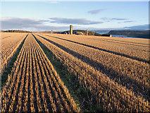 NH6454 : Wheat stubble field, Tullich Steading, Black Isle by Julian Paren