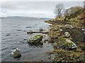 NH6263 : Cromarty Firth shore by Toberchurn by Julian Paren