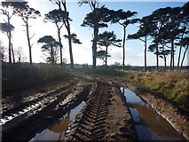 NT6378 : East Lothian Landscape : Ride On Track? by Richard West