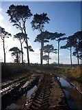 NT6378 : East Lothian Landscape : Off-road Near Hedderwick Hill by Richard West