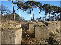 NT6378 : East Lothian Landscape : Blocks With Tufts On Top by Richard West