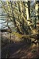 ST7163 : Footpath down Padleigh Bottom by Derek Harper