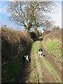 SH8675 : Track to Bryn Adda by Jonathan Wilkins