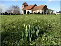 TA0015 : St Andrew's Church, Bonby with daffodils by Neil Theasby