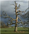 SN0113 : Dead Tree by Alan Hughes