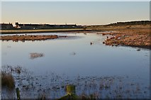 NZ2796 : Wildlife reserve pond, Druridge by Jim Barton