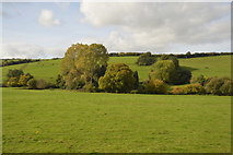 ST0104 : Trees by the River Culm by N Chadwick