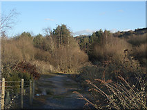 SS8280 : Track and woodland east of South Cornelly by eswales