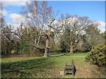 TQ3870 : Seat in Beckenham Place Park by Des Blenkinsopp