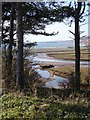 SY0782 : Otter estuary through the trees on the east bank by David Smith