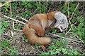 TF0327 : Dead fox by Bob Harvey