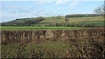 ST6961 : Conygre Brook valley by Derek Harper