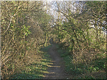 SS8280 : Public footpath in woodland, South Cornelly by eswales