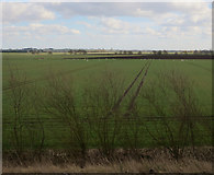 TL4176 : Swans by the Ouse Washes by Hugh Venables