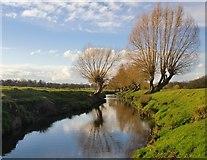 TQ2173 : Pollard willows by Beverley Brook, early March 2016 by Stefan Czapski