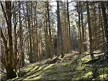 NT2341 : Mixed woodland, Jedderfield by Jim Barton