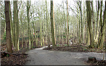 TG1607 : Path through GreenAcres woodland burial ground by Evelyn Simak