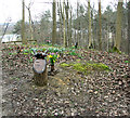 TG1608 : Graves at GreenAcres woodland burial ground by Evelyn Simak