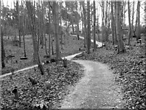 TG1607 : GreenAcres woodland burial ground by Evelyn Simak