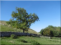 NT9529 : Akeld Hill by Richard Webb