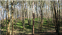 TG1608 : Green hillside with trees at GreenAcres by Evelyn Simak