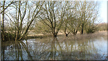 TG1608 : The River Yare in flood by Evelyn Simak