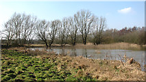 TG1608 : Flooded conservation area at Colney by Evelyn Simak