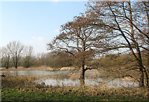 TG1608 : Flooded meadow in Colney by Evelyn Simak