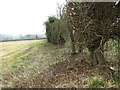 TG1902 : View along a field boundary hedge by Evelyn Simak