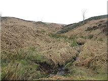 SE1767 : Near Beck, Pateley Moor by John Slater