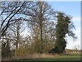SK2729 : Marlpit Plantation, Egginton by M J Richardson
