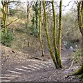 SJ9594 : Steps into Gower Hey Wood by Gerald England