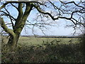 SK6959 : Looking over fields from the Robin Hood Way by Graham Hogg
