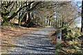 NX4464 : Kirroughtree Lade Trail by Billy McCrorie