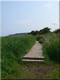 SH5580 : Anglesey Coast Path by Eirian Evans