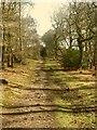 SJ9058 : Biddulph Country Park: Obelisk Walk, looking uphill by Stephen Craven