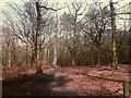 SJ9059 : Biddulph Country Park: woodland by Stephen Craven