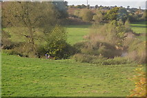 ST7846 : River Frome by N Chadwick