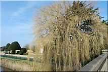 TF2424 : Willows at The Yews Farm by Bob Harvey