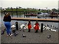 H2244 : Feeding birds, Enniskillen by Kenneth  Allen