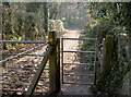 ST5959 : By Sutton Hill Road by Neil Owen