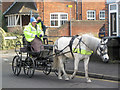 SP9211 : A Horse and Trap in Western Road, Tring by Chris Reynolds