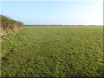 SW8772 : Field near Tredowner near St Merryn by Philip Halling