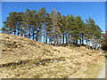 NN2743 : Small stand of pine trees near Forest Lodge above Loch Tulla by John Ferguson