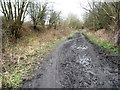 SE3303 : Tracks of users on the Trans Pennine/ Dove Valley Trail by Christine Johnstone